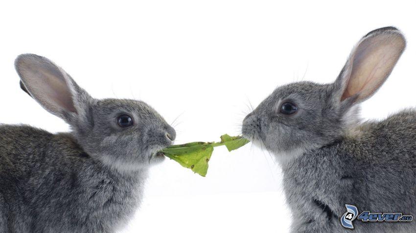 kaniner, löv, föda