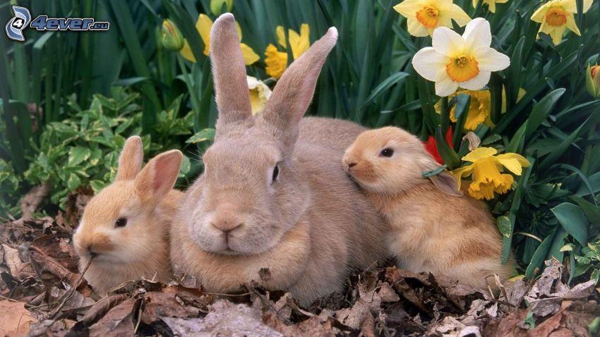 kaniner, påsklilja, torra löv