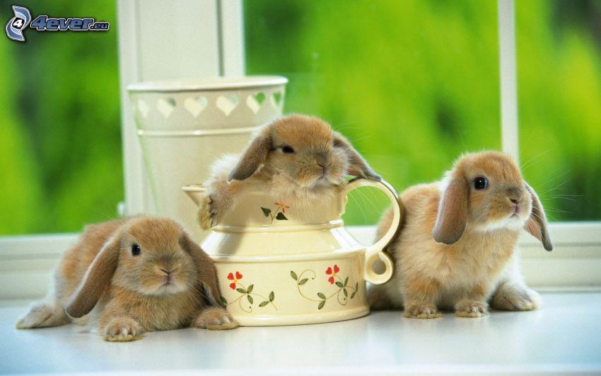 kaniner, tekanna