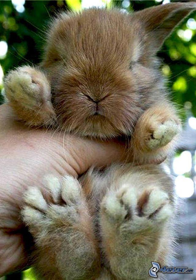 liten kanin, hand
