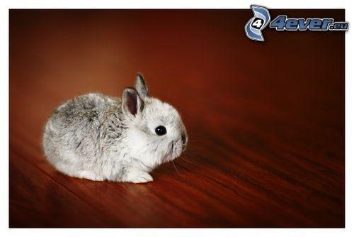 liten kanin, unge