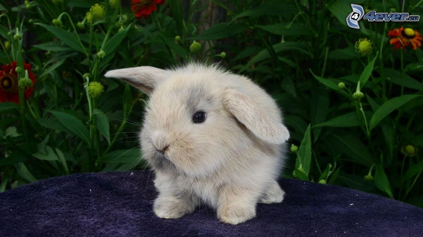 liten kanin, växter