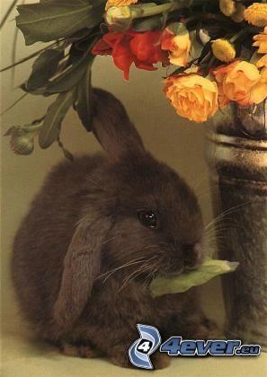 svart kanin, kruka