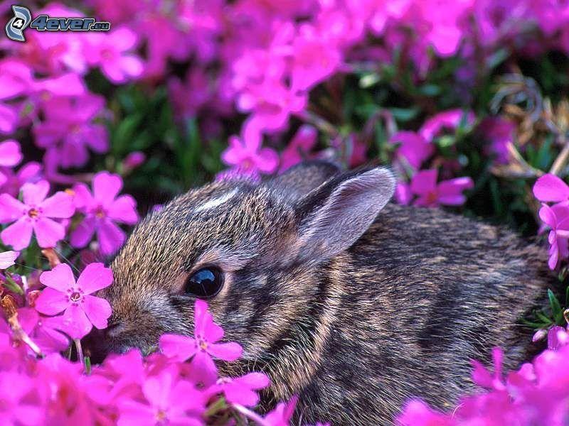 svart kanin, lila blommor