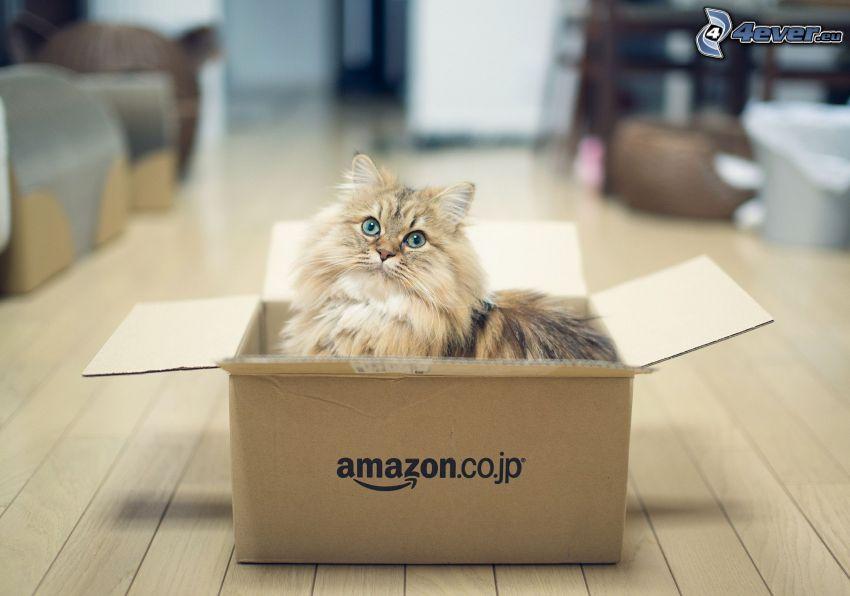 brun katt, låda