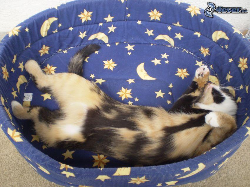 fläckig kattunge, sovande kattunge, korg