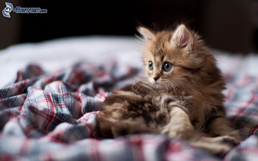 fluffig kattunge