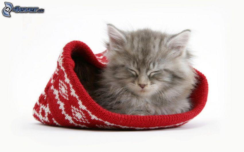 grå kattunge, sovande kattunge, mössa