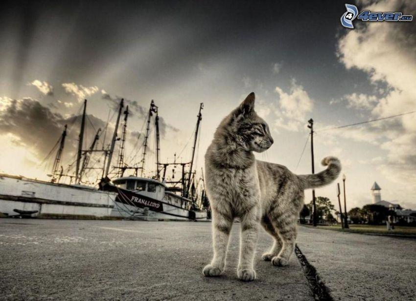 katt, båt, HDR