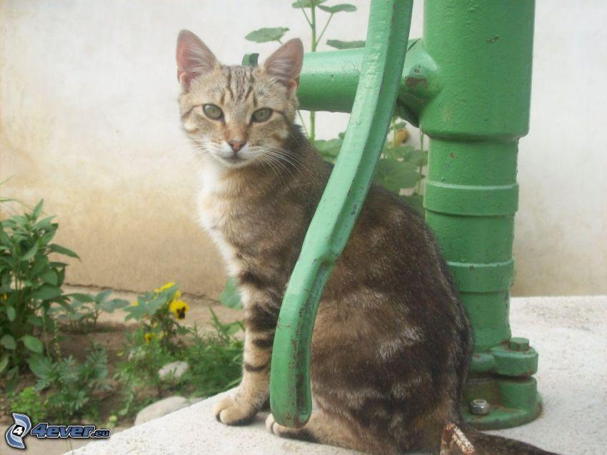 katt, brunn