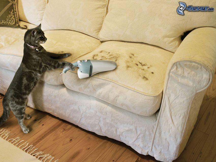 katt, dammsugare, päls, soffa