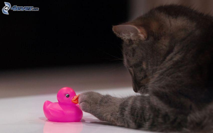 katt, gummianka