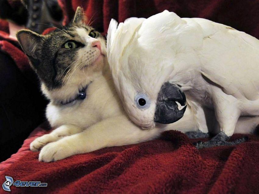 katt, papegoja
