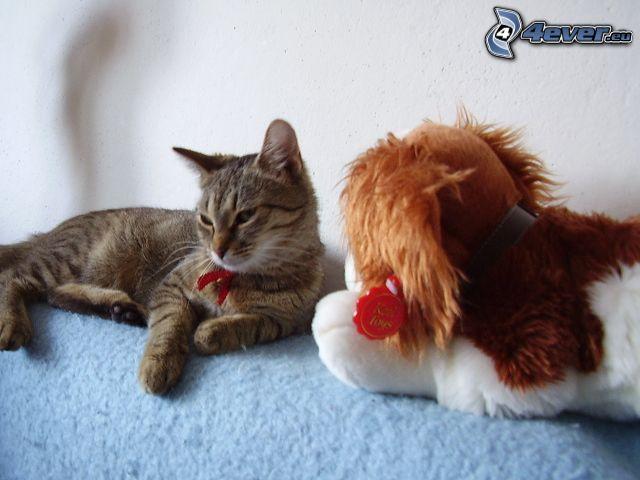 katt, rosett