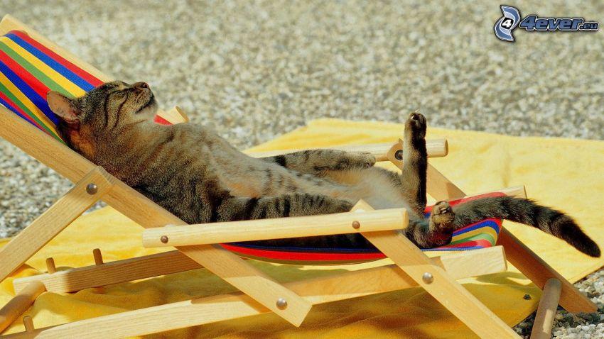 katt, vila, solstol