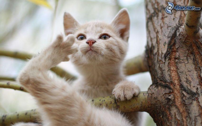 katt på en gren, bark