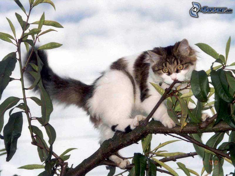 katt på en gren, buske