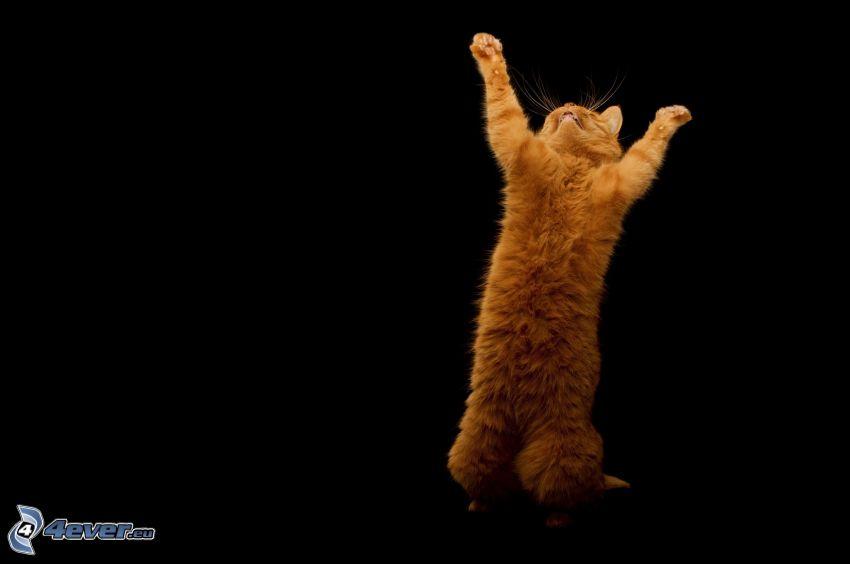 katt sträcker på sig