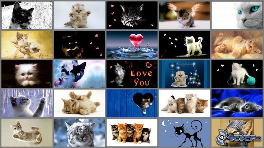 katter, collage, hjärtan