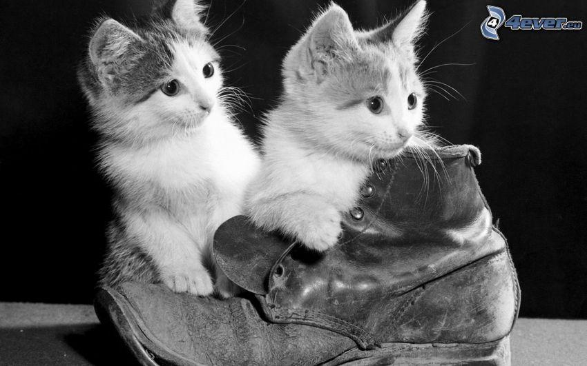 kattungar, sko, svart och vitt