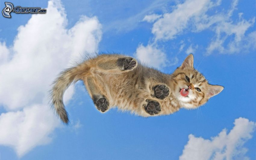 kattunge, räcka ut tungan, himmel