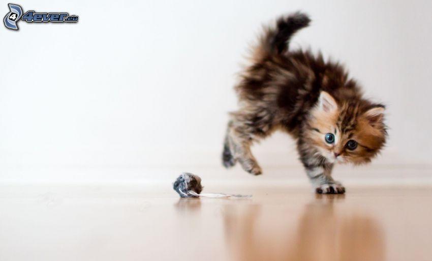 lekfull kattunge