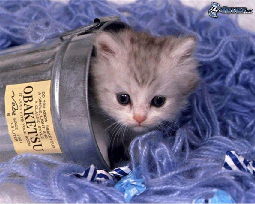 liten grå kattunge, kattungar i hink, hink, bomull