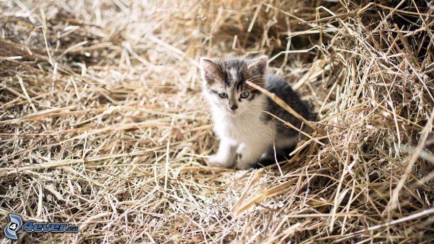 liten kattunge, halm