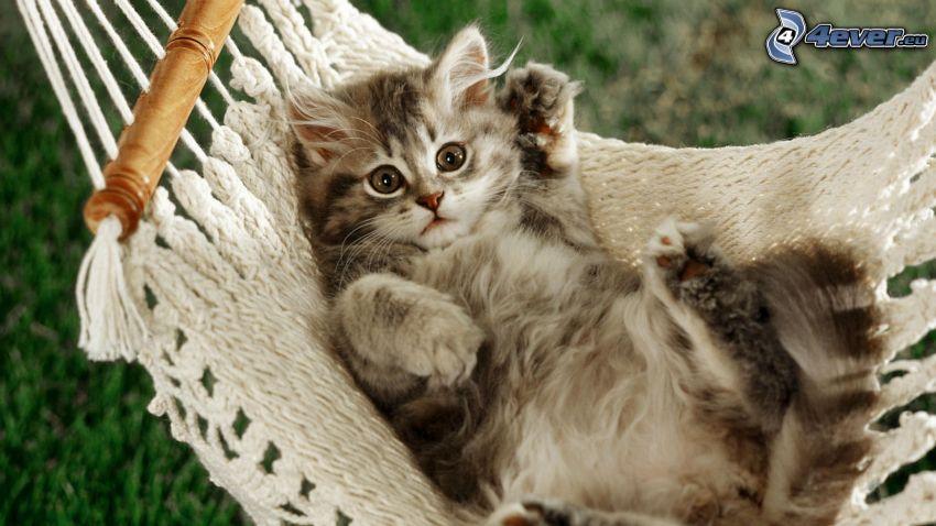liten kattunge, hängmatta