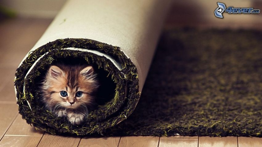 liten kattunge, matta