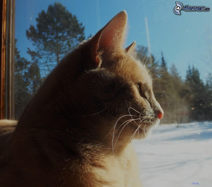 rödhårig katt, katt bakom fönster