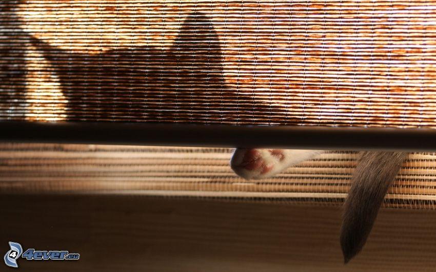 silhuett av katt, gardin, vila