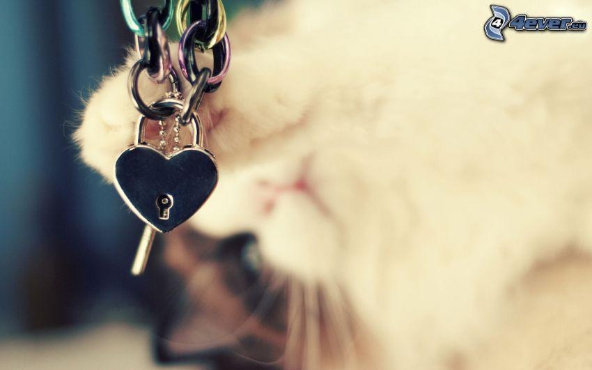 slott, hjärta, kedja, tass, katt