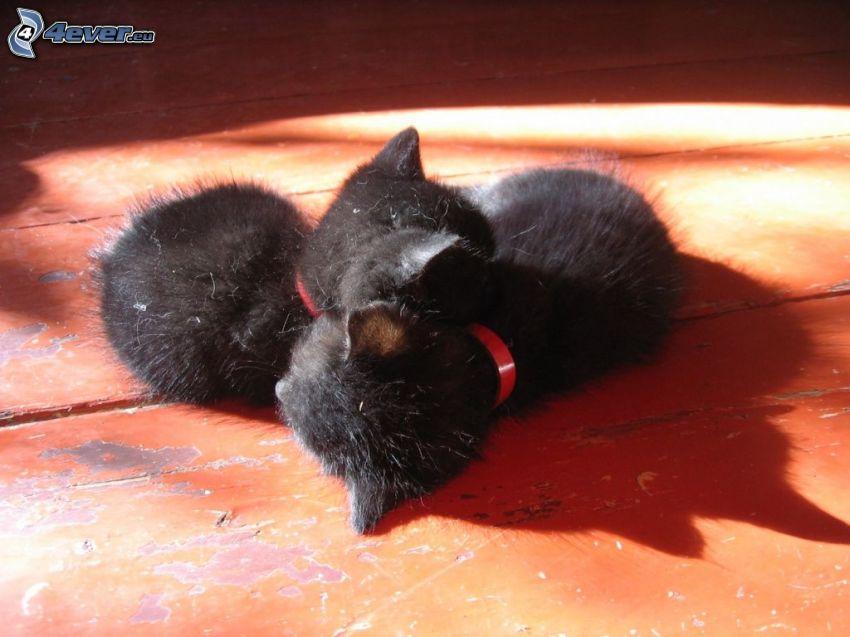 små kattungar, svarta katter, sovande katter