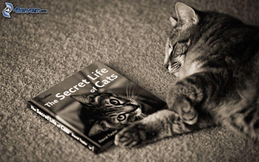sovande katt, bok, svart och vitt