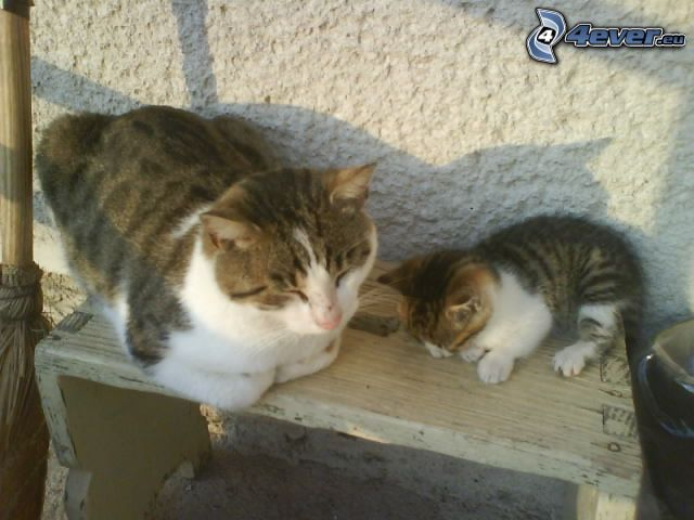 sovande katter, kattunge, bänk