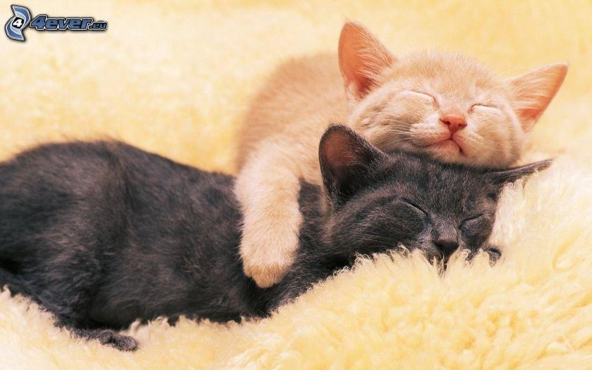 sovande katter, sömn