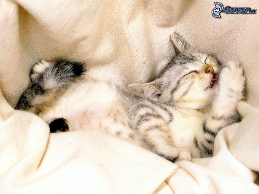 sovande kattungar