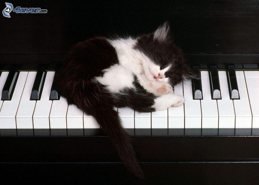sovande kattunge, piano