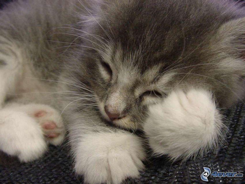 sovande kattunge