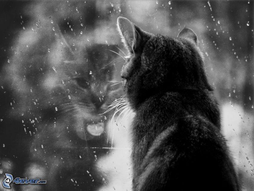 svart katt, fönster, svartvitt foto