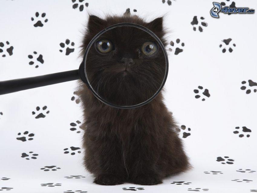 svart katt, förstoringsglas, kattspår