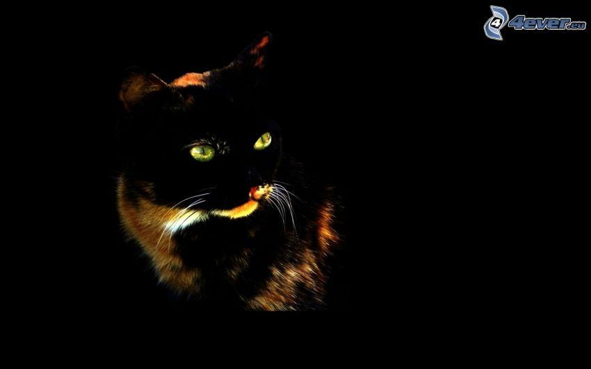 svart katt, gröna kattögon