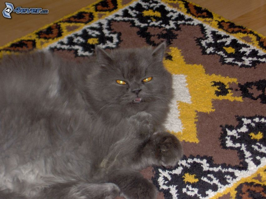 svart katt, matta