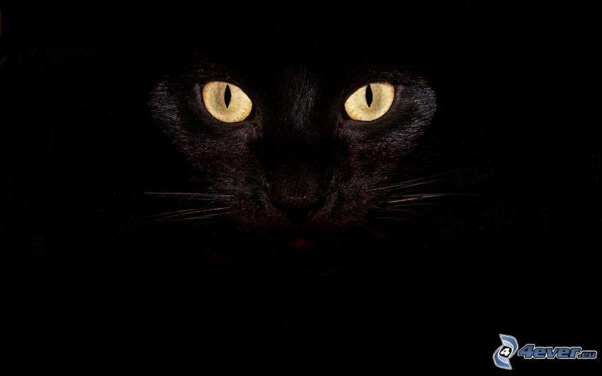svart katt, mörker, ögon