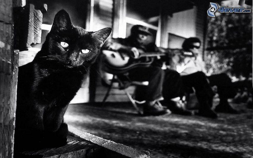 svart katt, svartvitt foto