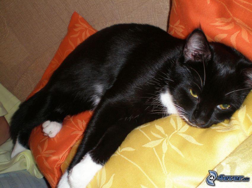 svart katt, vila, kudde