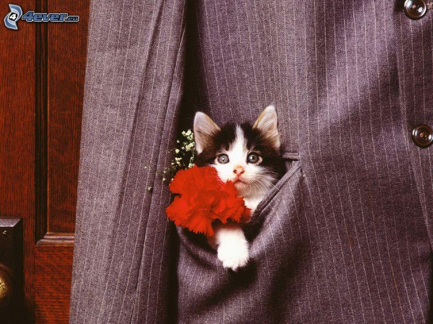 svartvit kattunge, röd blomma, kavaj