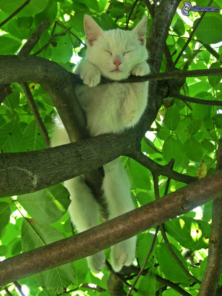 vit katt, träd, vila