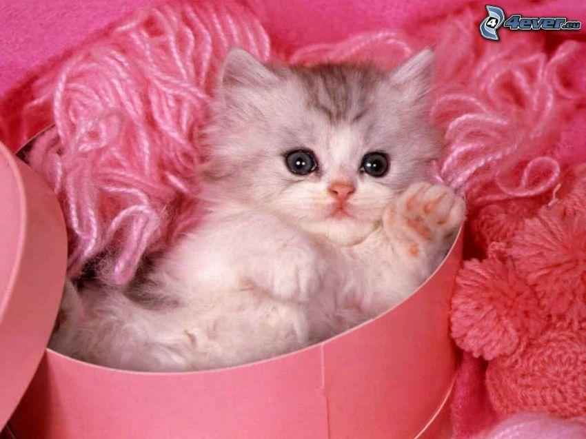 vit kattunge i låda, vila